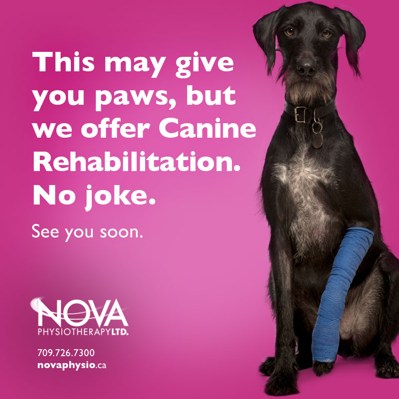Canine Rehabilitation